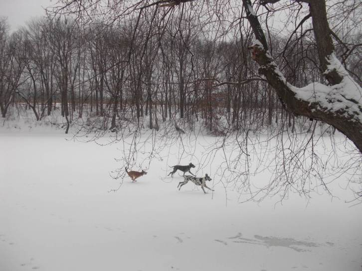 dogs running on the frozen creek
